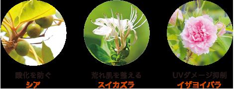 酸化を防ぐ シア / 荒れ肌を整える スイカズラ / UVダメージ抑制 イザヨイバラ